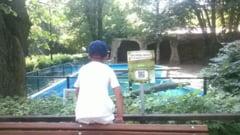 E Ziua Internationala a Gradinilor Zoologice si Parcurilor! Program pentru copii la Zoo Bucuresti