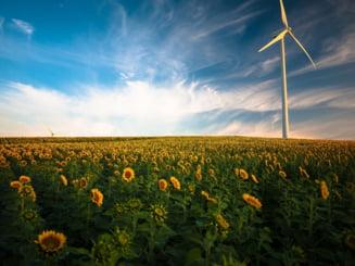 Efectele secetei extreme din Romania: productia de floarea soarelui, rapita si soia a scazut cu 42%