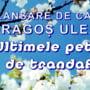 """Elevul Dragos Uleanu lanseaza cartea de proza scurta """"Ultimele petale de trandafir"""""""