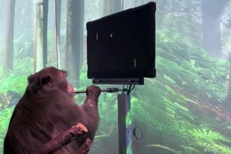 Elon Musk, pregatit sa puna cipuri in creierele oamenilor. Maimuta cu implant se joaca uimitor pe monitor VIDEO