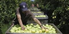 Embargoul importului de alimente ar putea sa fie bumerangul presedintelui Putin