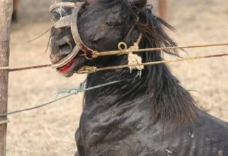 Emil Boc cere respectarea legii, privind bunastarea cailor de la Letea