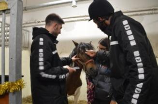 Eston, calul de cinci ani pentru care a avut loc o strangere de fonduri, a fost operat cu succes la USAMV Cluj