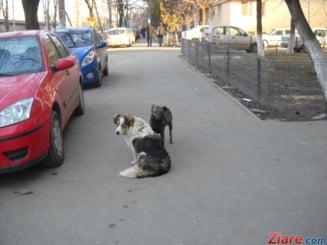 Europarlamentarii fac recomandari romanilor, legat de cainii vagabonzi: Cereti ajutor