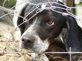 """Europol: Proiectul """"Politiei Animalelor"""", elaborat de ministrul Vela, contestat de ONG-urile din domeniu"""