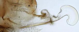 Exista niste insecte, femele, care au evoluat si acum au penisuri complet functionale