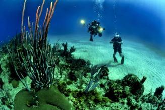Experiment inedit: Recifele de corali ar putea fi salvate cu ajutorul unor boxe subacvatice