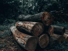 Exploatarile forestiere si zonele de depozitare a deseurilor vor fi urmarite prin satelit. Ministerul a lansat licitatia pentru sistemul care va descoperi ilegalitatile