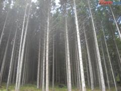 Exportul de lemn nu e suspendat - Proiectul de lege nu a trecut inca de Parlament