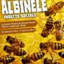 "Expozitia ""Albine-insecte sociale"" ramane deschisa pana in ianuarie"
