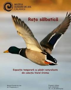 """Expozitia """"Mirajul faunei baltilor calarasene - Rata salbatica"""", la Muzeul Dunarii de Jos"""