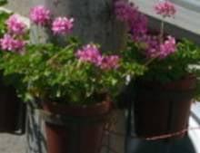 """Expozitie de flori """"De Florii"""""""