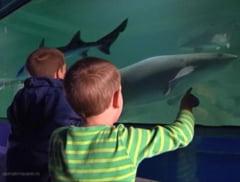 Expozitie de rechini vii intr-un acvariu mobil la Lotus Center