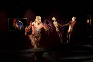 Expozitie despre corpul uman, la Muzeul Antipa
