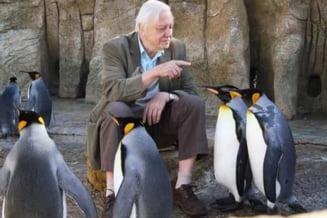 Extinctia speciilor pune in pericol viitorul umanitatii, avertizeaza naturalistul David Attenborough