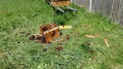 FOTO - Atacuri ale ursilor la Gheboieni! Animalele au coborat neasteptat de mult si nu se tem sa intre in gospodarii