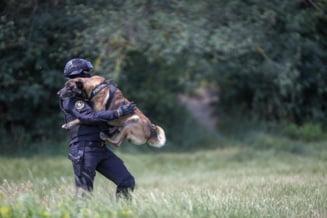 FOTO: Povestea lui Toi, cainele de la SAS Iasi care astazi implineste 5 ani