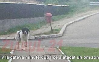 """FOTO Barbat sfasiat de caini in Cluj: """"La mana, o sa fiu operat pentru tendonul smuls"""". Apelul disperat al victimei"""