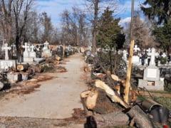 """FOTO Imaginea dezolarii. Cum au fost """"toaletati"""" arborii dintr-un cimitir din Bucuresti"""