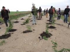 FOTO-VIDEO Salcami pusi de localnicii din Dingeni in gropile de pe drumul judetean