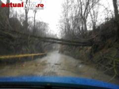 FURTUNA in zona Remetea Chioarului - Remecioara. Copacii doborati de vant si drum blocat. Instalatia de cablu de la Mogosa lovita de fulger (FOTO)