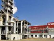 Fabrica Kronospan incepe productia la sfarsitul lui septembrie