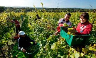 Fara muncitorii romani, agricultura din Marea Britanie se va prabusi - The Guardian