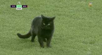 Faza zilei in Anglia. O pisica neagra a intrat pe terenul lui Everton si a adus ghinion formatiei gazda (Video)