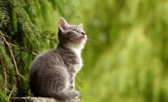 Femeie din Suceava, amendata cu 3.000 de lei pentru ca si-a abandonat pisica