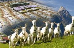 Fermieri din Gradinari, trimisi in judecata pentru 320 de animale... virtuale!