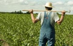Fermierii, chemati la plata impozitelor