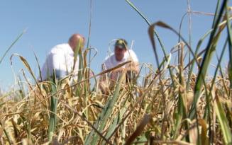 Fermierii afectati de seceta, asteptati sa depuna cererile pentru despagubiri
