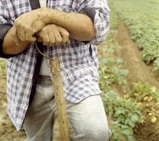 Fermierii ameninta cu greva foamei