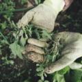 Fermierii care au culturi afectate de seceta vor fi despagubiti dupa rectificarea bugetara