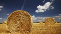Fermierii cer interventia statului pe piata agricola