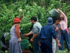 Fermierii din Franta trebuie sa returneze sute de milioane de euro