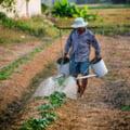Fermierii ies in strada. Principala nemultumire: despagubirile pentru seceta nu se regasesc in bugetul Ministerului Agriculturii