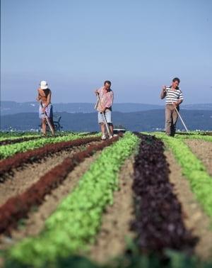 Fermierii pot forma grupuri de producatori ca sa primeasca bani europeni