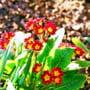 Festivalul Florilor de Primavara si Targul Pascal, doua evenimente gazduite concomitent, saptamana viitoare, de Sala Polivalenta din Braila