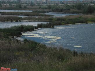 Firea ar putea primi de la Guvern Delta Vacaresti: Va fi administrata de Primarie si un ONG