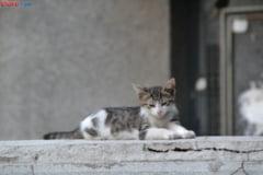 Firea vrea sa microcipeze cainii si pisicile cu stapan: 10.000 de animale fara pedigree intra in program