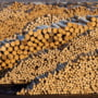 Firma austriaca Holzindustrie Schweighofer ameninta cu instanta in cazul Codului silvic