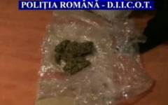 Flagrant si perchezitii la traficantii de droguri din Prahova. 800 de grame de cannabis, gasite la membrii gruparii