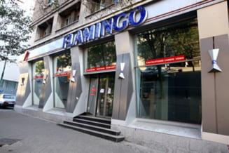 Flamingo a intrat in insolventa