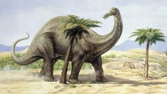 Flatulentele dinozaurilor au dus la incalzirea planetei