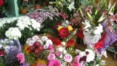 Florarie din Campulung Moldovenesc, distrusa din motive necunoscute