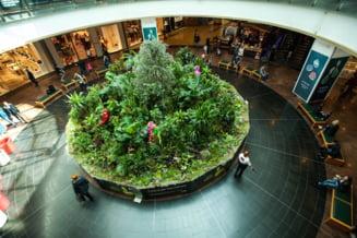 Floria semneaza decorul floristic pentru aniversarea a 9 ani Baneasa Shopping City