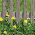 Florile galbene ale primaverii - cum iti ajuta ele sanatatea