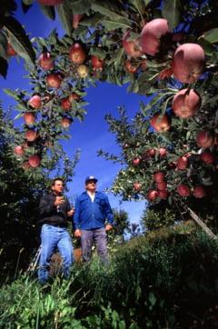 Fonduri Europene pentru cultura pomilor fructiferi