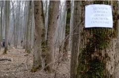 """Forestierii acuza ca Alexe face doar """"circ mediatic"""" si nu salveaza Padurea Baneasa, ci o lasa prada imobiliarilor"""